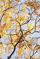 hermoso bosque otoñal con hojas amarillas foto