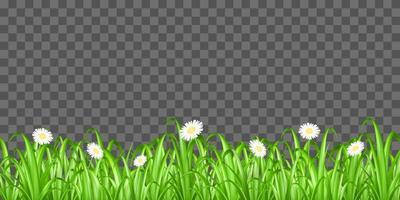 hierba y flores aisladas vector