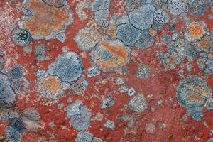 Liquen colorido que crece sobre una roca en la luz del sol foto