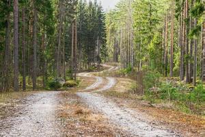 Pequeña carretera sinuosa que pasa por un bosque de pinos y abetos foto