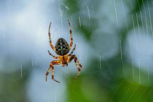 Araña de jardín en su web durante el día. foto