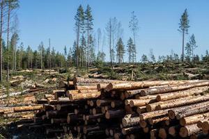 deforestación con madera y ramas en el suelo foto