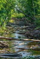 Vista de verano de un arroyo represado por castores foto