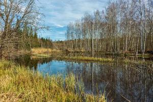Forest area flooded by beavers photo