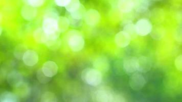 verano borroso verde vibrante bokeh video