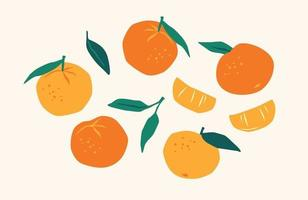 Set of drawn tangerines. Citrus fruits, oranges, mantarines. Vector illustration. Isolated elements