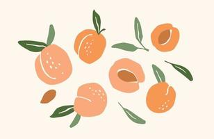 Set of drawn apricots vector