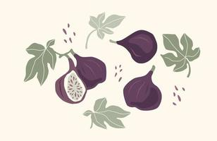 Set of drawn figs, Vector illustration. Isolated elements