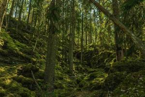 Bosque salvaje que crece en la ladera de una montaña en Suecia foto