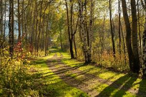 Natural landscape with a view of trees and a path in the grove. photo