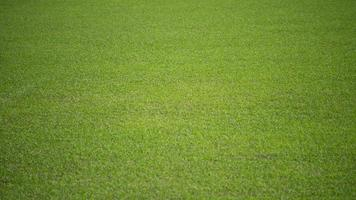 Natural background of a green football pitch of grass. photo