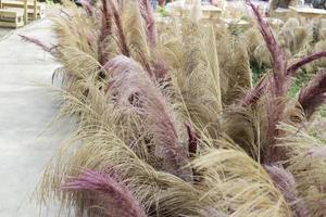 hierba rosa y beige foto