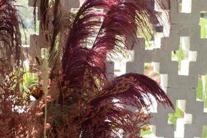 Hierba colorida con pared decorativa exterior foto