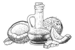 Whole half and oil of Coconut hand drawn vector retro illustration