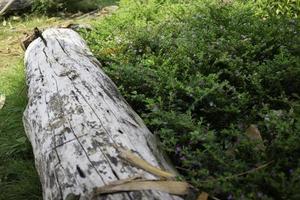 White wooden log near flowers photo