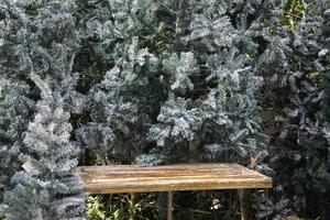 Bench with pine trees photo