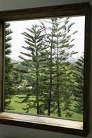 Conifer trees window view photo
