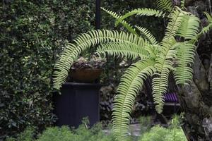 Ferns and ivy photo