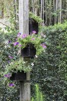 Potted hanging flowers photo
