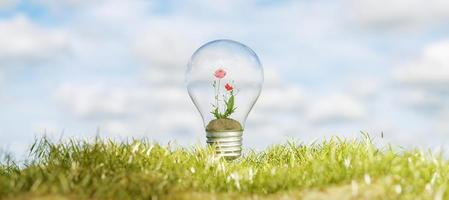 Light bulb with flowers inside on grass photo