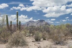 Landscape and desert of Baja California Sur in the Baja Peninsula of Mexico under a cloudy and blue sky photo