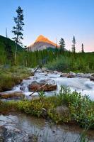 Última luz en Mount Weed, Banff, National Park, Alberta, Canadá con un arroyo y flores silvestres en primer plano foto