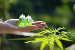 Hand holding a glass bottle with CBD oil and cannabis leaf at the background photo