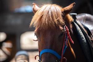 Cerca de retrato de cabeza de caballo marrón, animal mamífero con estable que vive en una granja, pelo de naturaleza ecuestre y cara de yegua, equino y melena foto