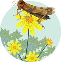 Saltamontes alado falido con flor brittlebush aislado vector