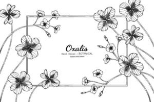 Oxalis flower and leaf hand drawn botanical illustration with line art. vector
