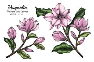 Pink Magnolia flower and leaf drawing illustration with line art on white backgrounds. vector