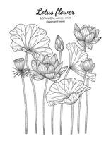 Lotus flower and leaf hand drawn botanical illustration with line art on white backgrounds. vector