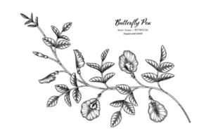 Butterfly peas flower and leaf hand drawn botanical illustration with line art. vector