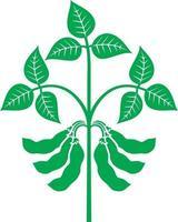 soya plant vector illustration