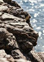 Close up of beach rock photo