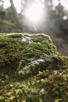 Cerca de musgo del bosque foto