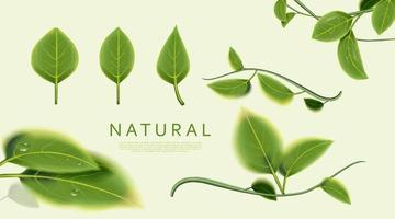 Natural leaves on green background. vector