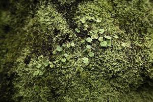 primer plano de hojas y musgo foto