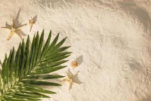 Palm tree leaf on sand photo