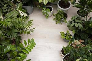 marco de plantas foto