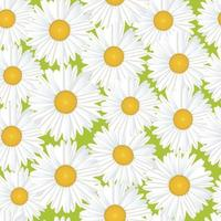 Flower chamomile bouquet seamless floral pattern.  Flourish Blooming meagow white flowers  on light green summer background vector