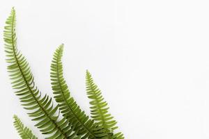 Vista superior de hojas de helecho con espacio de copia foto