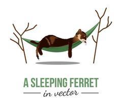 SLEEPING  FERRET IN HAMMOCK vector