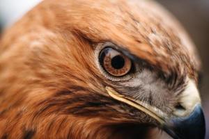 Sight of a bird of prey close-up photo