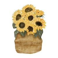 watercolor sunflower bouquet on traditional basket illustration vector