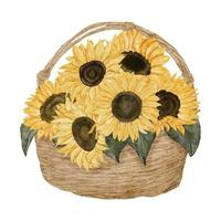 watercolor sunflower arrangement on basket illustration vector