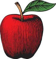 apple - vintage engraved vector
