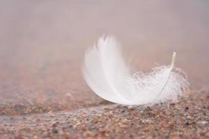 Feather on sand photo