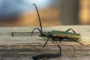 Green beetle on wood photo