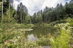 lago de montaña con abetos foto